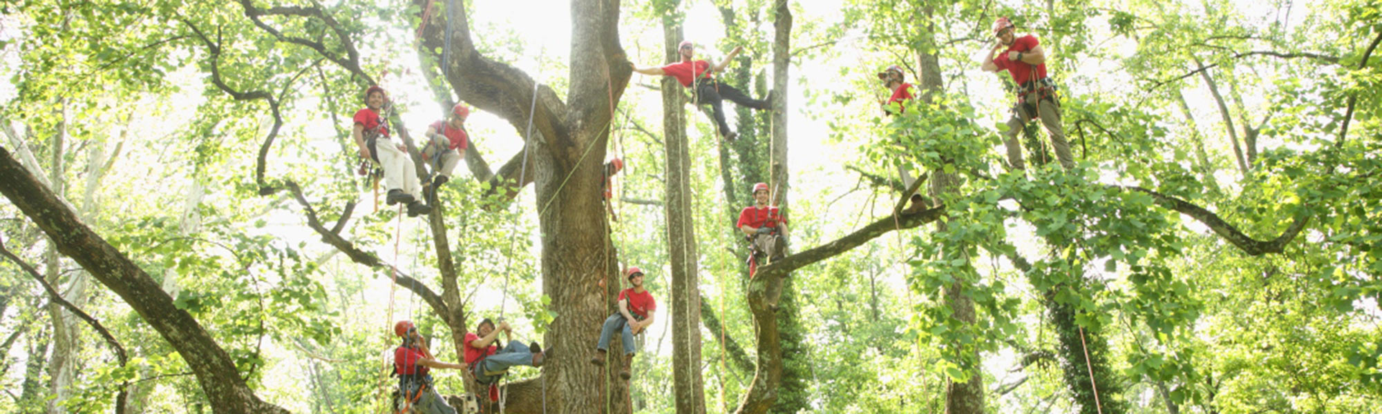 VYTC workers up in the trees.